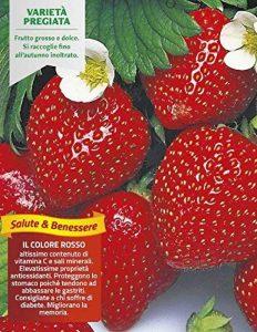 3plantes en pot ø10cm de fraise rifiorente 4saisons ortomio jardin potager de la marque image 0 produit