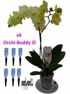 Arrosage automatique Solaire pour Orchidée ORCHI-BUDDY par 6 de la marque Solar-Dripper image 0 produit