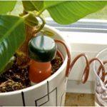 arrosage plante bouteille TOP 1 image 3 produit