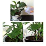 arrosage plantes bouteille plastique TOP 3 image 3 produit