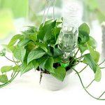 arrosage plantes bouteille plastique TOP 5 image 2 produit