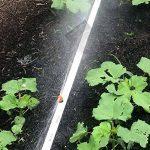 Claber micro-sprinkler bande, Lot de 10(912570000) de la marque Claber image 4 produit