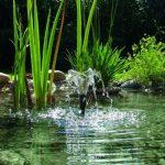 crépine pompe à eau TOP 5 image 4 produit