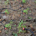 Himifuture 20Metres Micro Goutte Système d'irrigation arrosage Arroseur kit d'irrigation pour extérieur, Fleur, Pelouse, Terrasse, Jardin, de la marque Himifuture image 4 produit