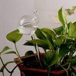 Kicode Globe d'auto-arrosage Ampoules d'eau végétale Escargots / Flamingo Shape Design Verre transparent soufflé à la main de la marque Kicode image 3 produit