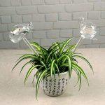 Kicode Globe d'auto-arrosage Ampoules d'eau végétale Escargots / Flamingo Shape Design Verre transparent soufflé à la main de la marque Kicode image 4 produit