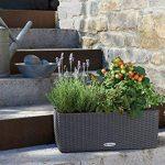 Lechuza Balconera Cottage 50Lot, granite, 50 de la marque LECHUZA image 2 produit