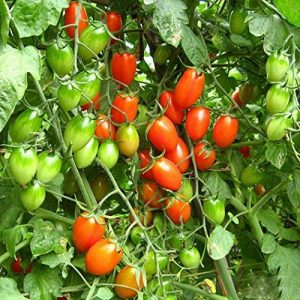 matériel irrigation occasion TOP 10 image 0 produit