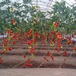 matériel irrigation occasion TOP 10 image 1 produit