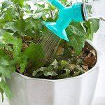 MyLifeUNIT Arroseur Bouchon de bouteille, bouteille à double tête d'arrosage Bec, bonsaï Arrosoir pour l'intérieur Jeunes Plants de la marque MyLifeUNIT image 2 produit