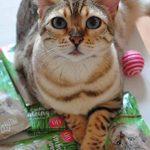 PRETTY KITTY 5 sachets de graines d'herbe à chat PrettyKitty ; Paquet de 5 sachets de semence de menthe aux chats pour environ 50 pots de la marque PRETTY KITTY image 4 produit