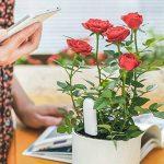 Soil Tester, OLLIVAN Intelligent Xiaomi Plant Monitor Bluetooth 4 en 1 Testeur Sol pour Nutrition des Plantes / Capteur D'humidité du Sol / Température / Lumière (Plantes Moniteur) de la marque OLLIVAN image 3 produit