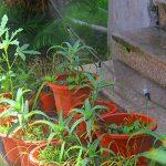 starnearby Micro-sprinklers Spray d'eau de refroidissement hydratant d'eau d'irrigation kit Ensemble big de la marque starnearby image 3 produit