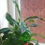 système arrosage plantes pendant vacances TOP 1 image 4 produit