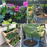 TedGem Kit Irrigation Goutte à Goutte, d'arrosage automatique système DIY Avec arrosage Micro Arroseur et 20m Tuyaux, pour jardin serre potager pelouse de la marque TedGem image 6 produit