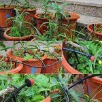 TedGem Kit Irrigation Goutte à Goutte, d'arrosage automatique système DIY Avec arrosage Micro Arroseur et 20m Tuyaux, pour jardin serre potager pelouse de la marque TedGem image 4 produit