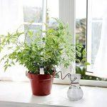 Wady Distributeur d'eau d'irrigation, Distributeur d'eau pour plantes d'arrosage automatique pour plantes (Lot de 6) de la marque Wady image 6 produit
